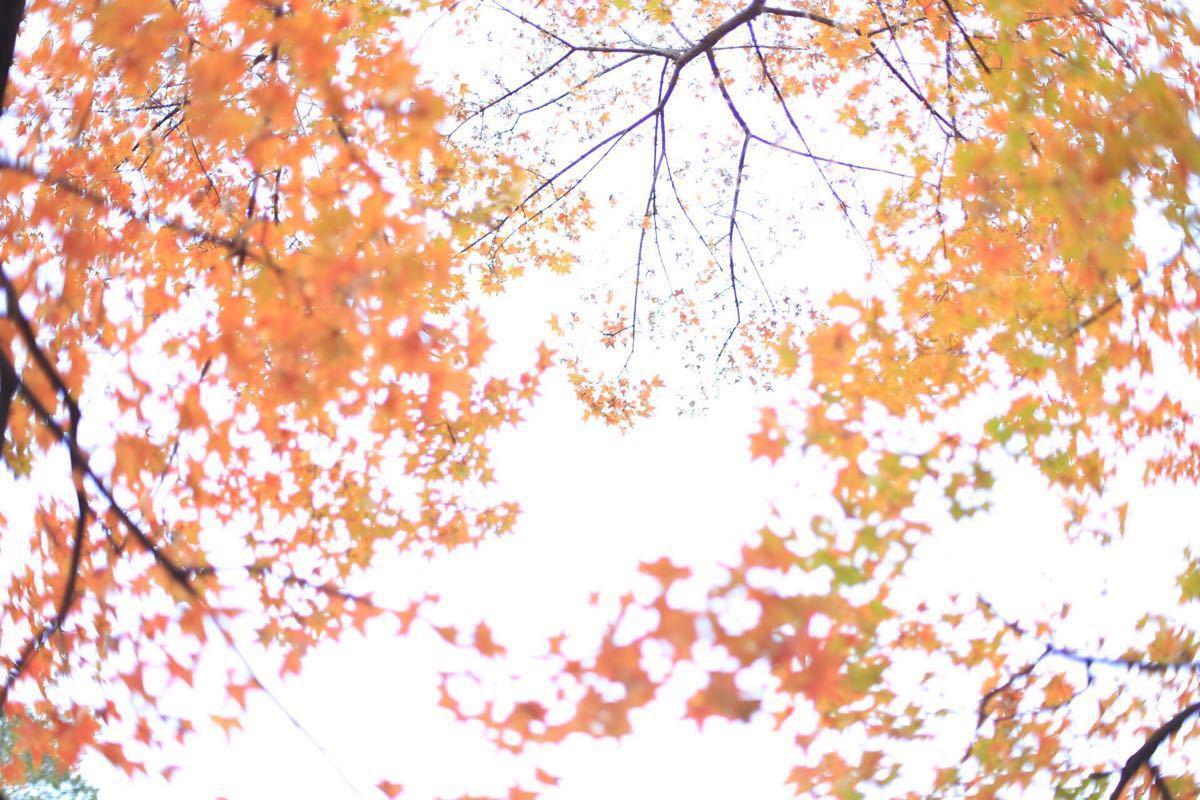 香山公园位于北京西山,是北京著名景点之一。 位于香山公园见心斋以南,地处半山,原为清皇家鹿园,后修建有一座寺庙的遗址,那是昭庙,全称宗镜大昭之庙。是清乾隆为接待西藏班禅来京而建,故世人称之为班禅行宫。六世班禅额尔德尼来到香山静宜园,在其行宫内休息。 昭庙一词,藏文音译为觉卧拉康,觉卧汉意为尊者,此处指释迦牟尼佛而言。昭庙在1860、1900年先后两次遭到英法联军的焚毁,昭庙残存无几,只留下红墙、琉璃牌坊和琉璃塔等遗迹。2012年前,昭庙作为公园内部用房并未开放。 2008年,昭庙修缮工程开始