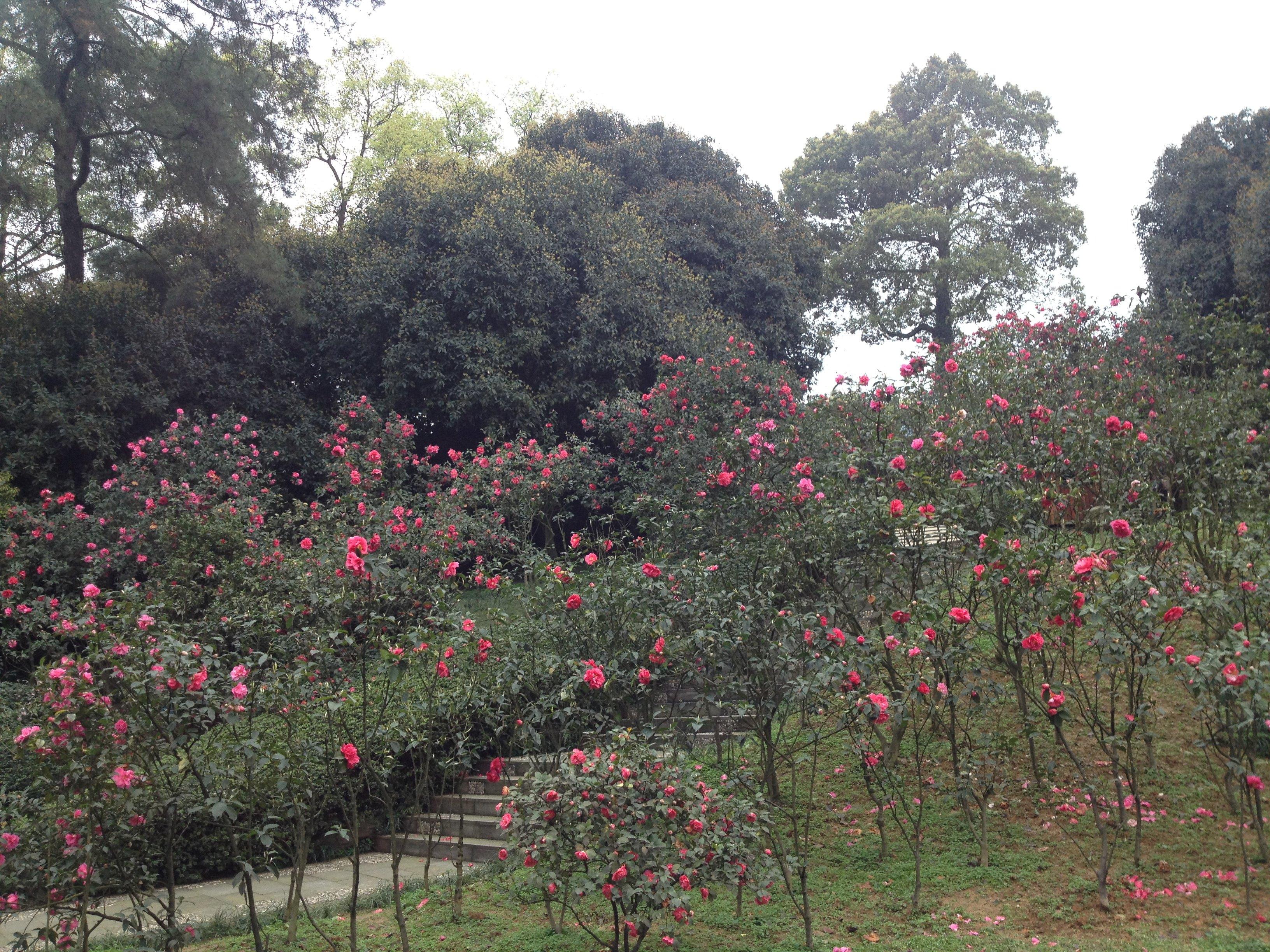 南山植物园