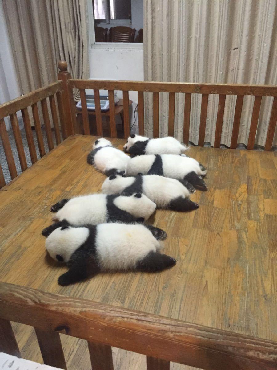 出游                                   我拍的小熊猫是不是很可爱
