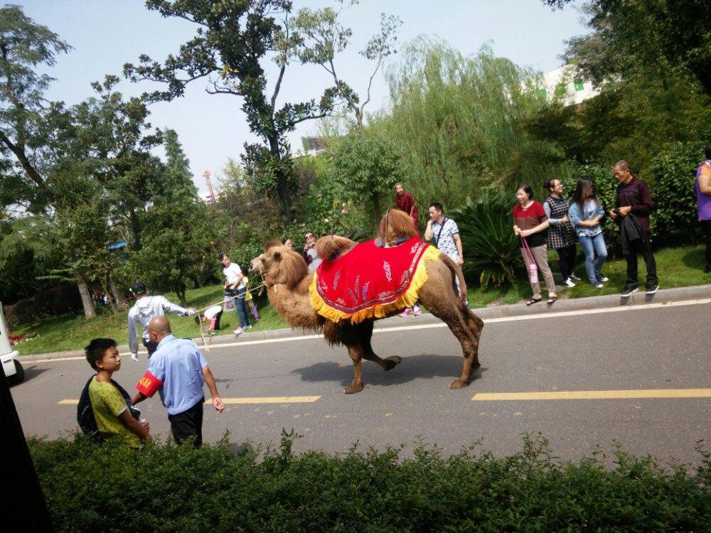 【携程攻略】湖南长沙长沙生态动物园好玩吗