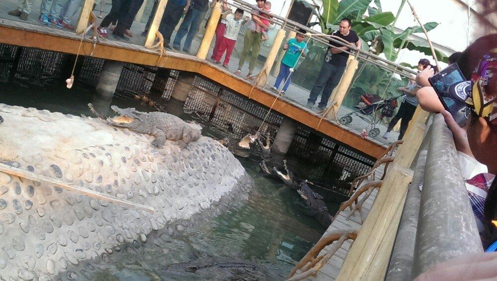 【携程攻略】河北石家庄市动物园景点,动物园挺大的转