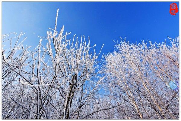 玉树琼花白狼峰,万缕银绒好雾凇 - 渝帆 - 渝帆空间