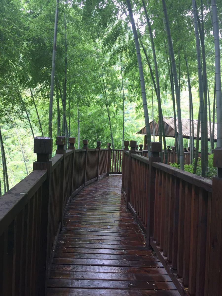 6月份公司旅游去了宜兴竹海,天气有点微微下雨,竹林图片
