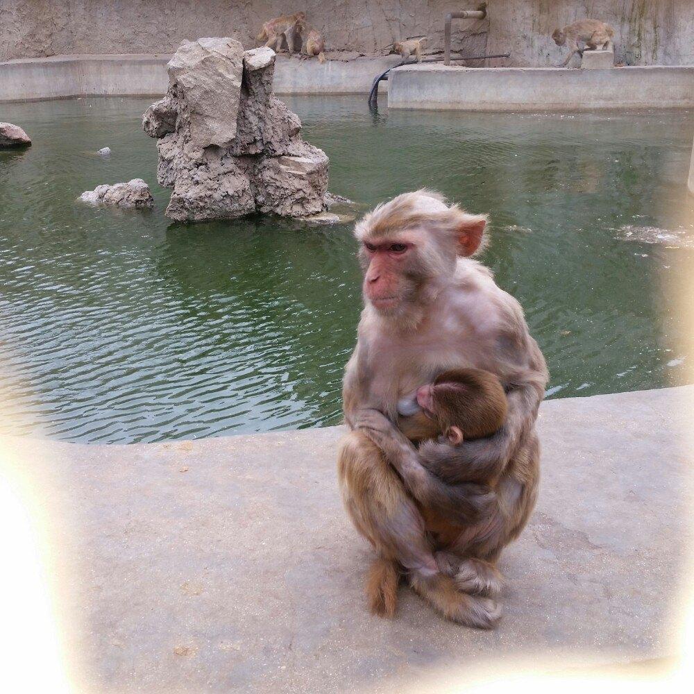 【携程攻略】河北秦皇岛北戴河秦皇岛野生动物园好玩