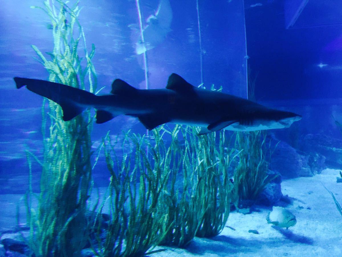 壁纸 海底 海底世界 海洋馆 水族馆 桌面 1200_900