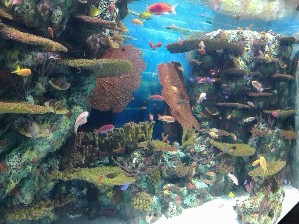 临近东方明珠,乘坐地铁2号线到陆家嘴站下,出地铁很快就到了上海海洋水族馆。 上海海洋水族馆是全世界唯一一家有独立中国展区来展示中国特有水生生物的水族馆,展示的生物大多数均为国家级保护动物,包括中华鲟、胭脂鱼、扬子鳄、娃娃鱼。馆内分为中国区、南美洲区、澳大利亚区、非洲区、东南亚区、冷水区、极地区、海岸区、深海区。