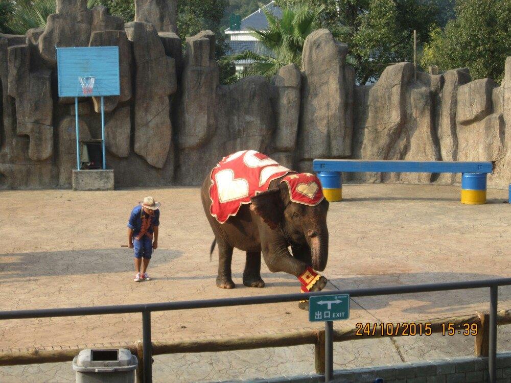 【携程攻略】湖南长沙长沙生态动物园好玩吗,湖南长沙