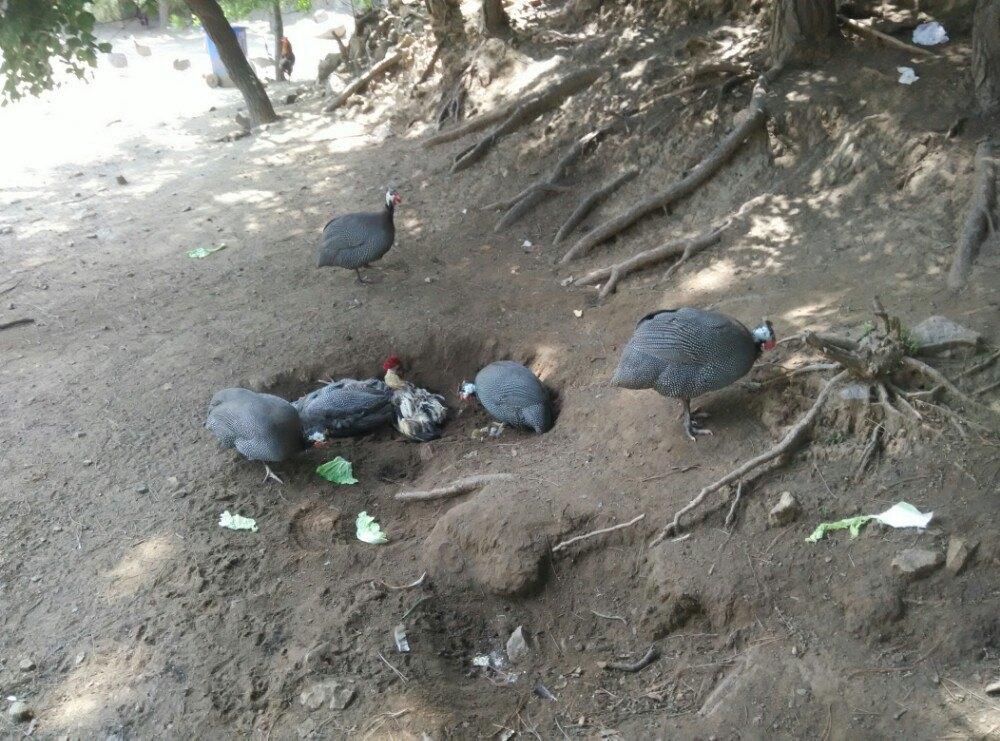 【携程攻略】延庆八达岭野生动物园适合朋友出游旅游