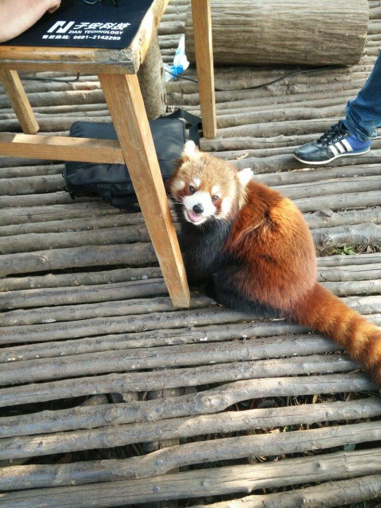 有很多可爱的动物,有趣的植物,小熊猫可投喂(给苹果就抱大腿