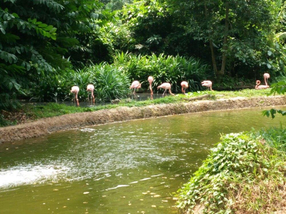 新加坡动物园景点