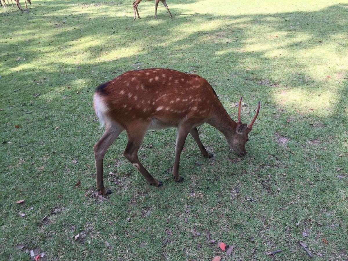 公园里动物开大会图片