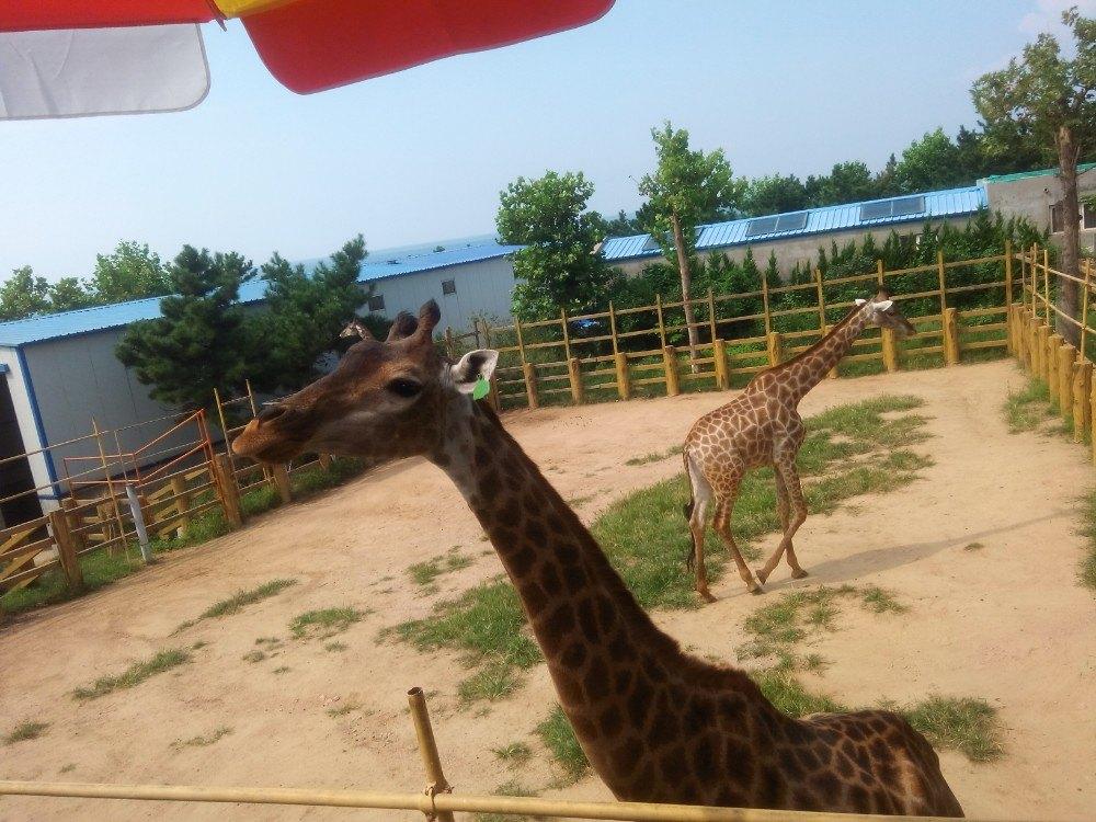 西霞口神雕山野生动物园吗