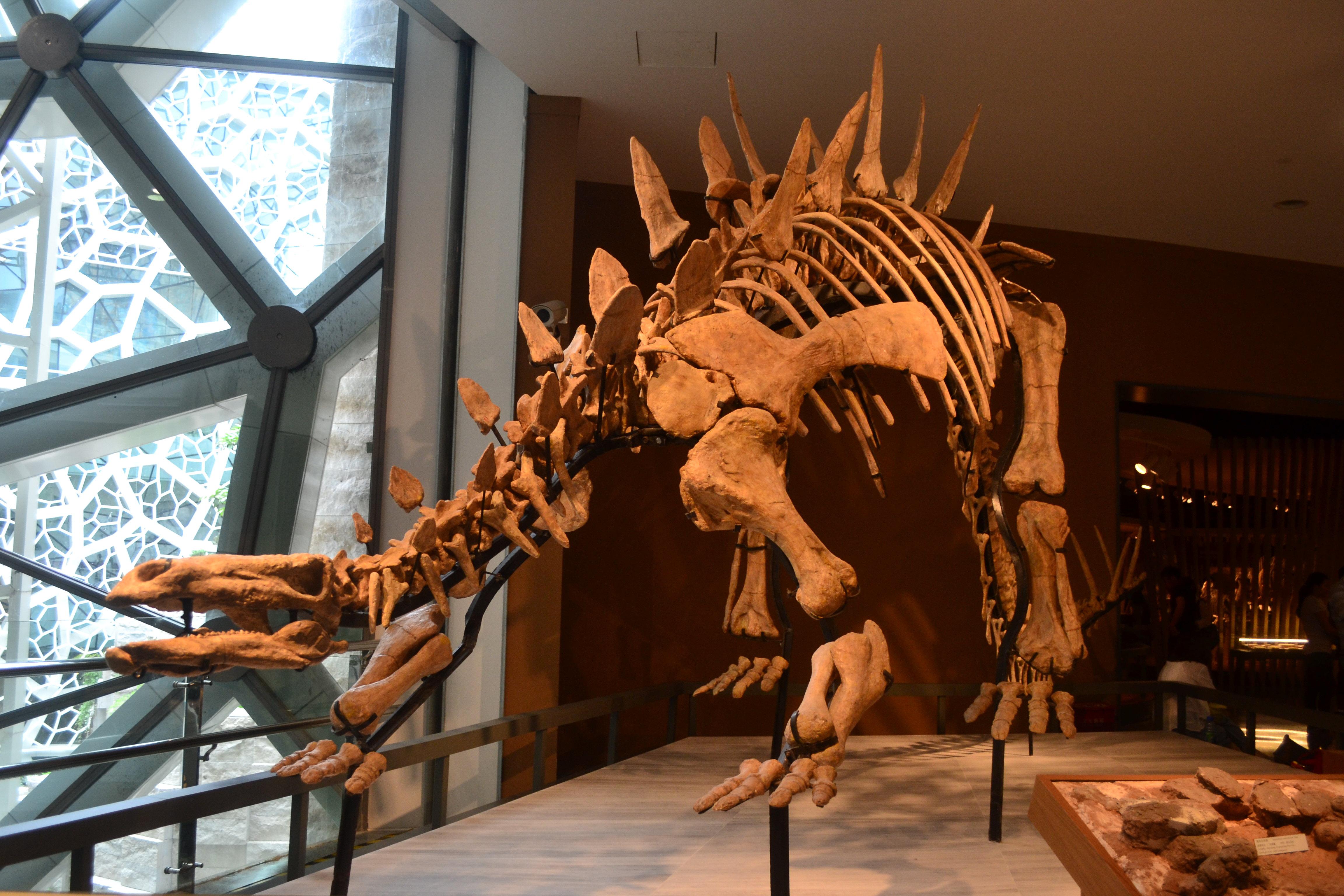 逛逛上海自然博物馆