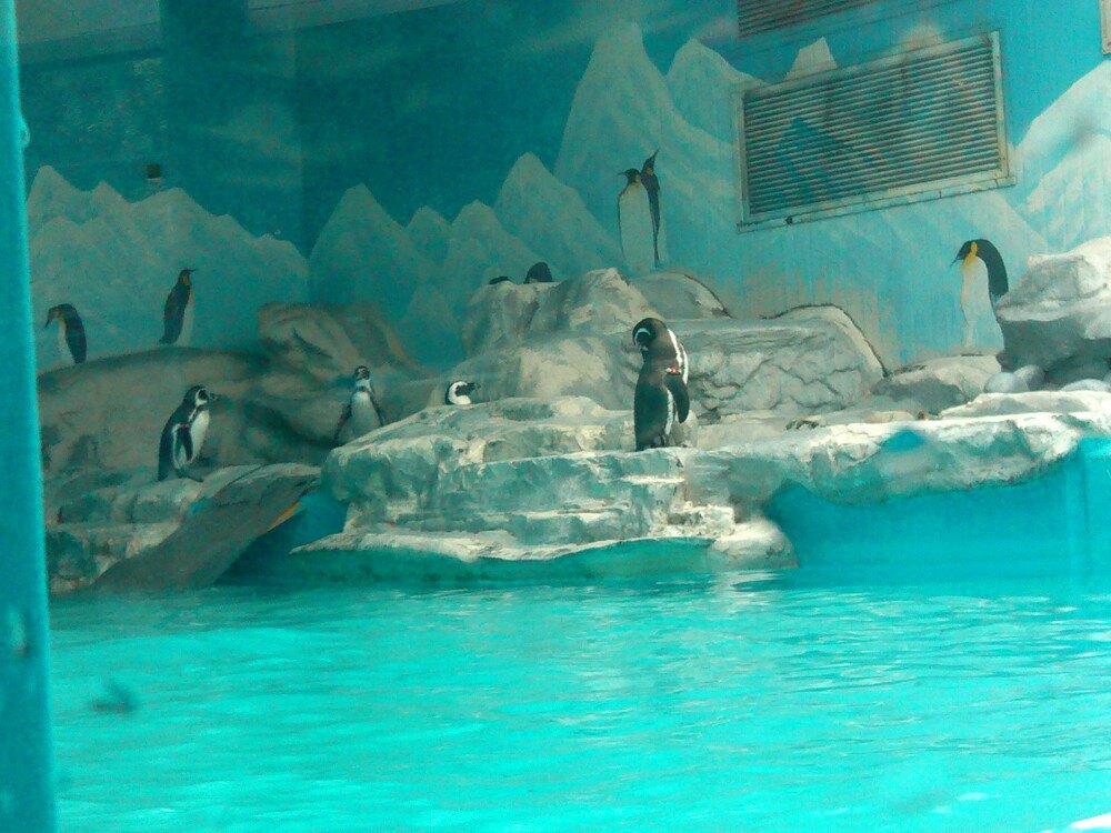 【携程攻略】北京北京动物园景点