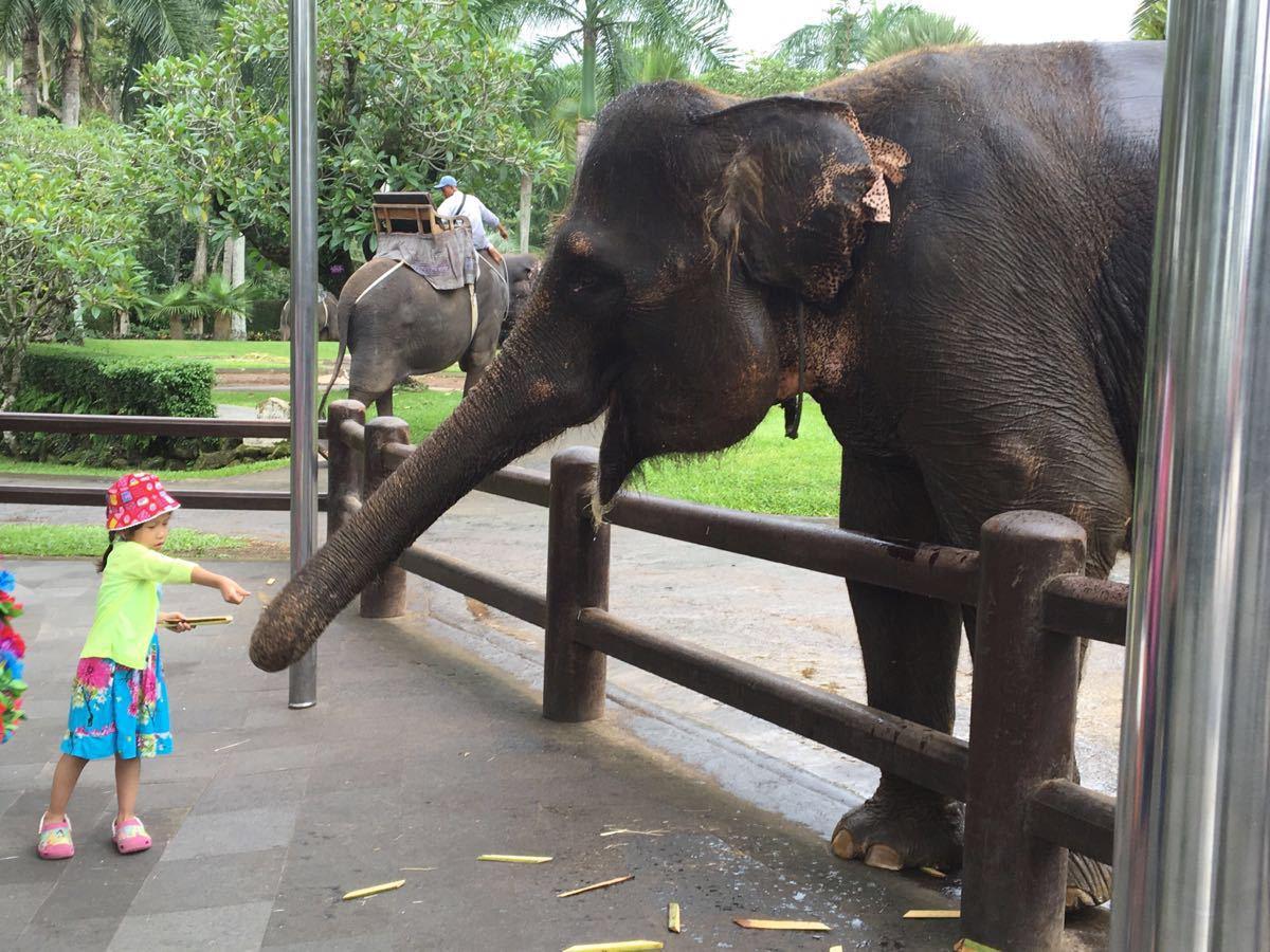 巴厘岛大象公园