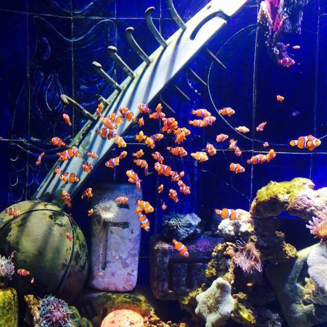 迪拜水族馆——寻找亚特兰蒂斯失落的空间图片
