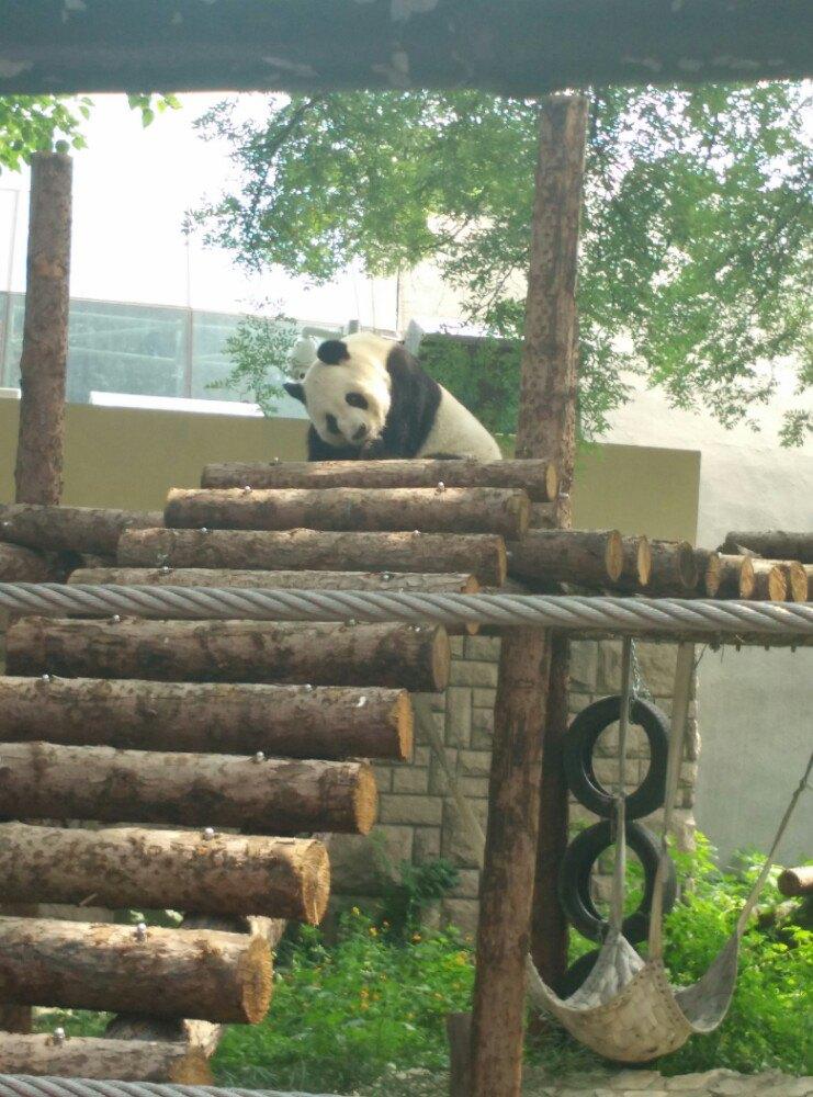 【携程攻略】北京北京动物园适合家庭亲子旅游吗,北京