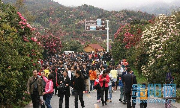 【携程攻略】贵州百里杜鹃风景区景点