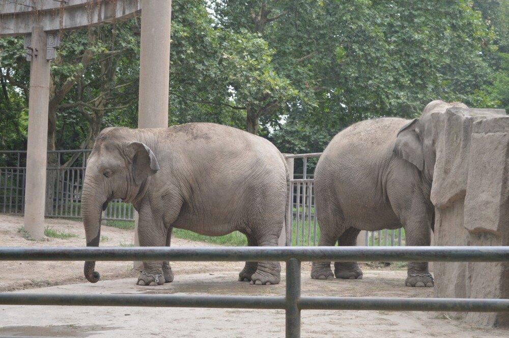 上海动物园景点
