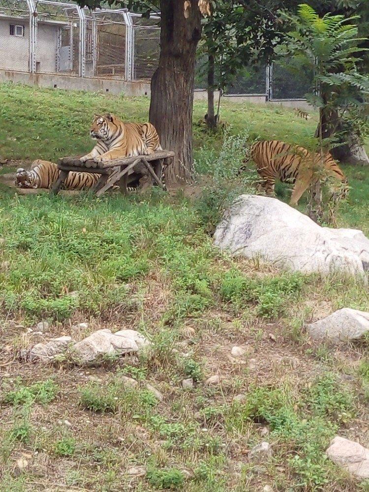 秦岭野生动物园旅游景点攻攻略守望物语手游略图图片