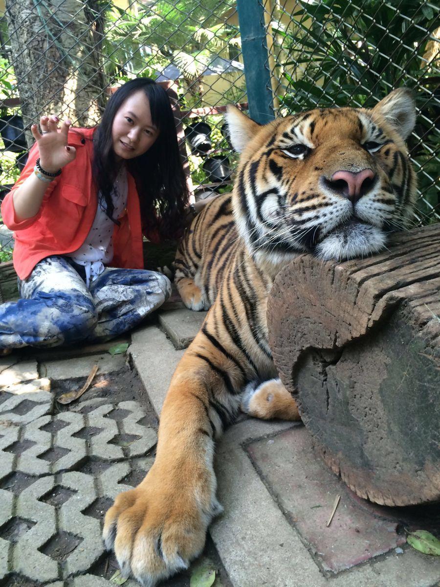 老虎也很可爱~很干净~几乎没有什么味道~~虎园一般老外很多没什么