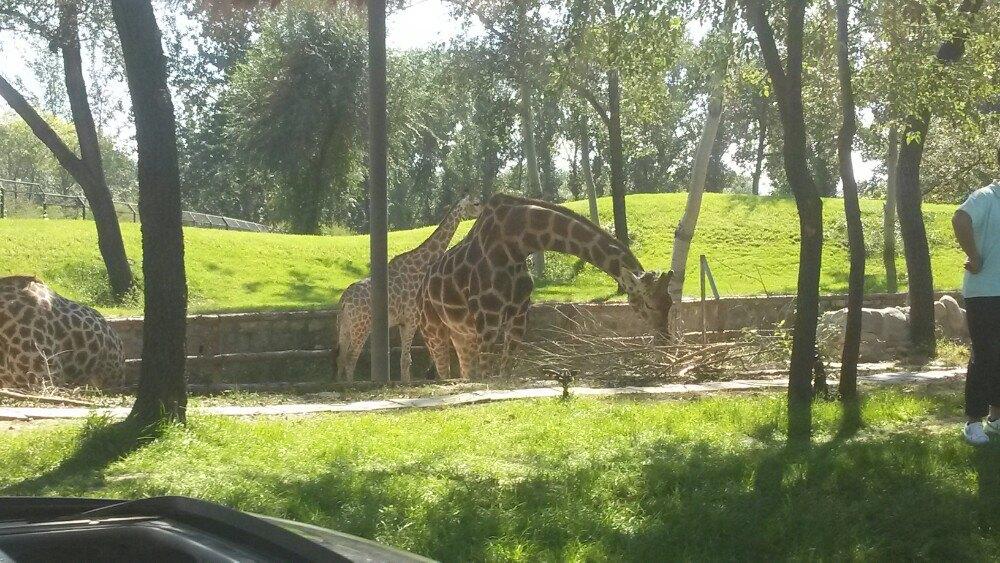 京野生动物园景点
