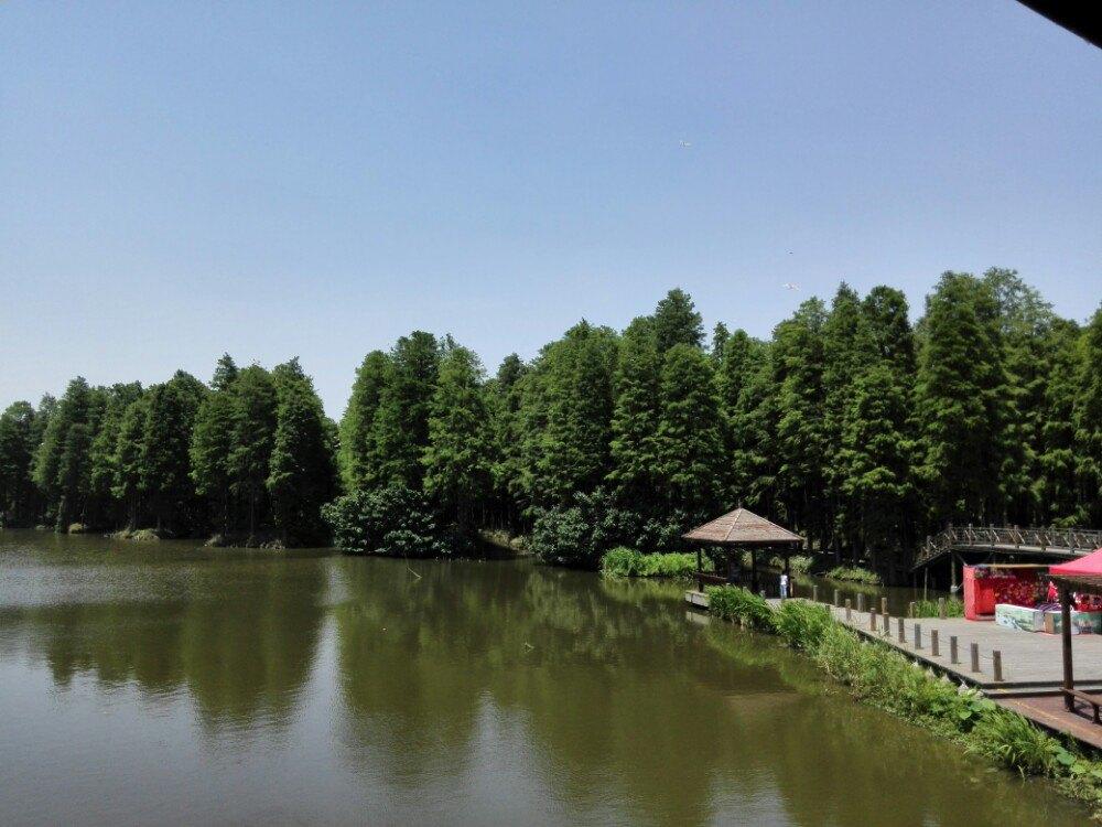 【携程攻略】兴化李中水上森林公园适合家庭亲子旅游图片