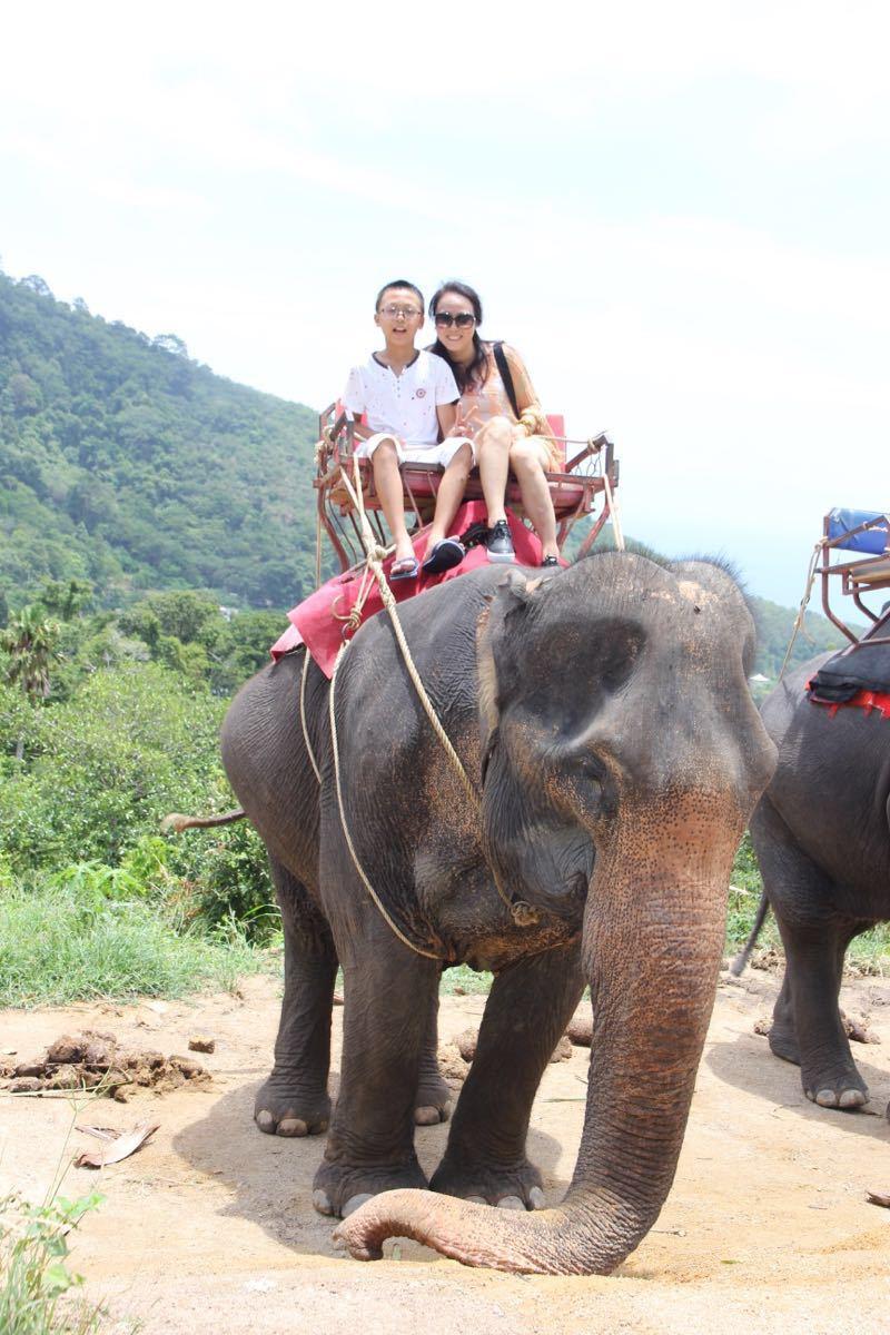 壁纸 大象 动物 800_1200 竖版 竖屏 手机