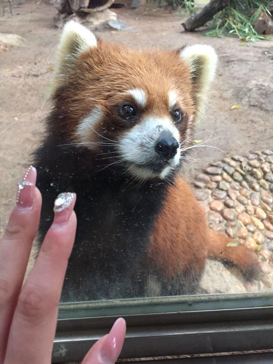野生动物园好玩吗