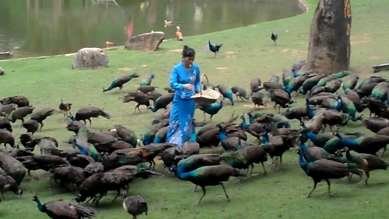 【携程攻略】云南西双版纳原始森林公园景点
