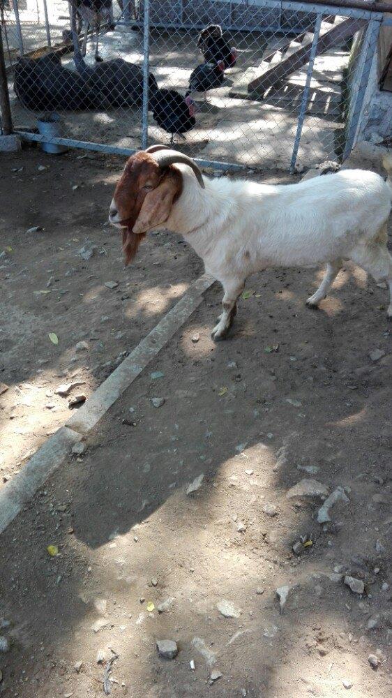 锦江山公园里的动物