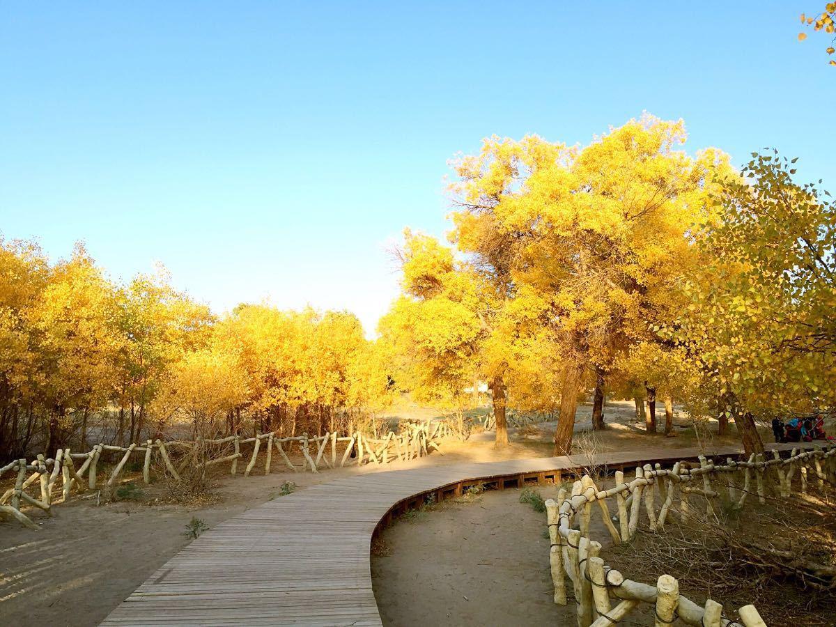内蒙古胡杨林风景区