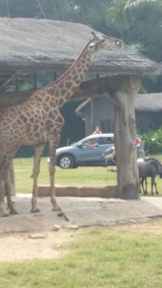 广州长隆香江野生动物园一日游
