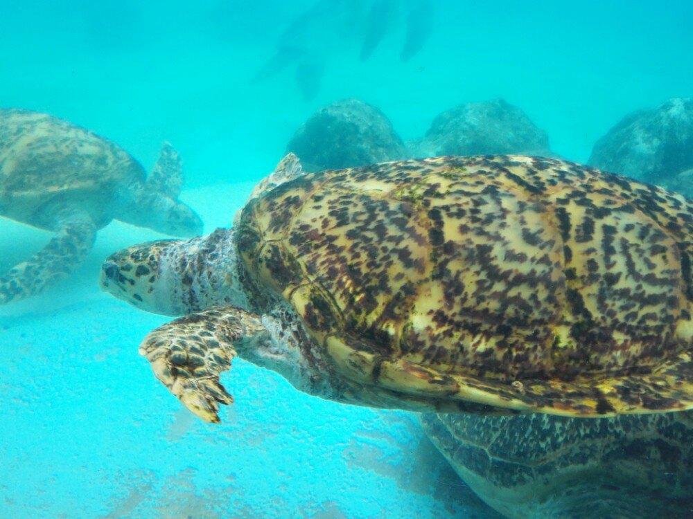 海洋博公园图片