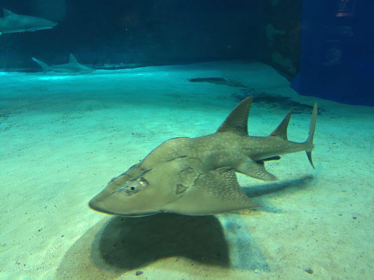 壁纸 动物 海底 海底世界 海洋馆 水族馆 鱼 鱼类 1200_900