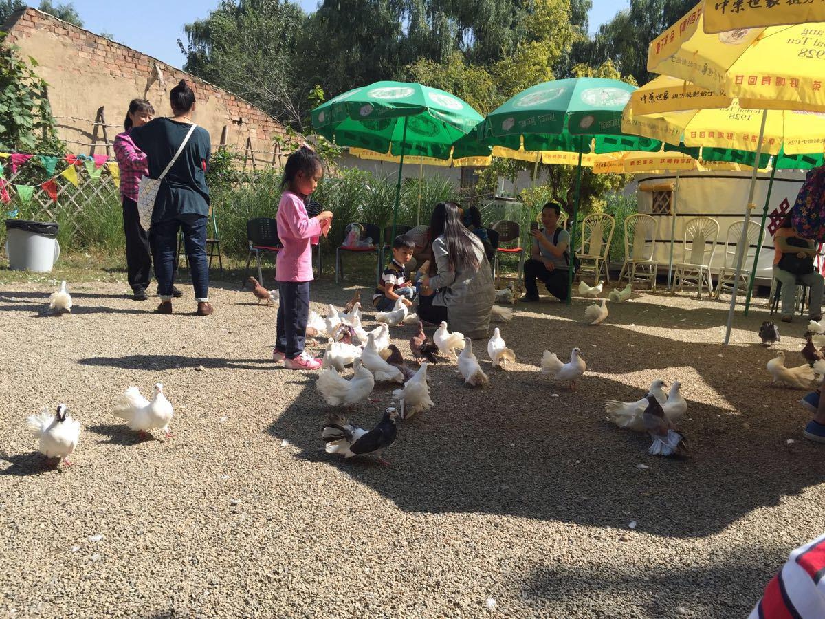 动物园的动物都被游客喂的饱饱的,可是他们见了食物还是不停的吃.