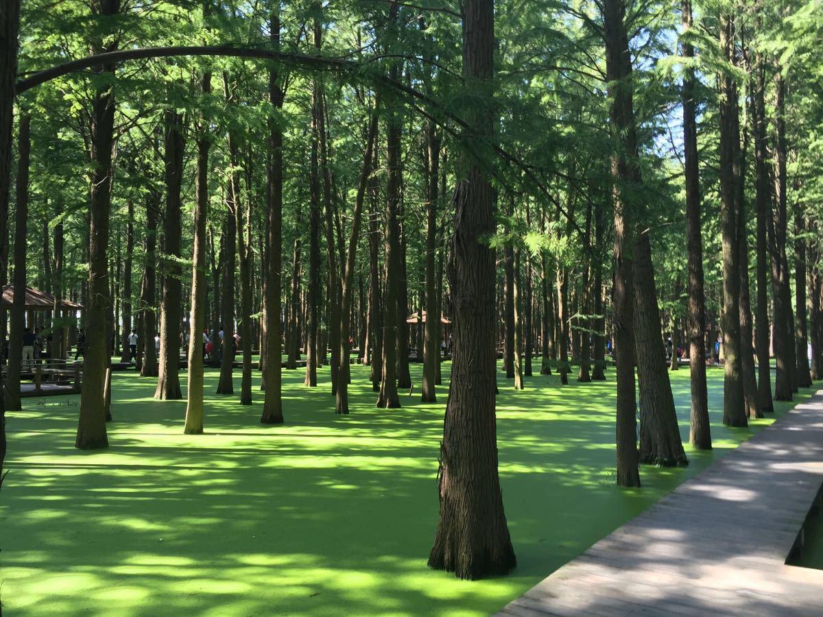 李中水上森林公园图片