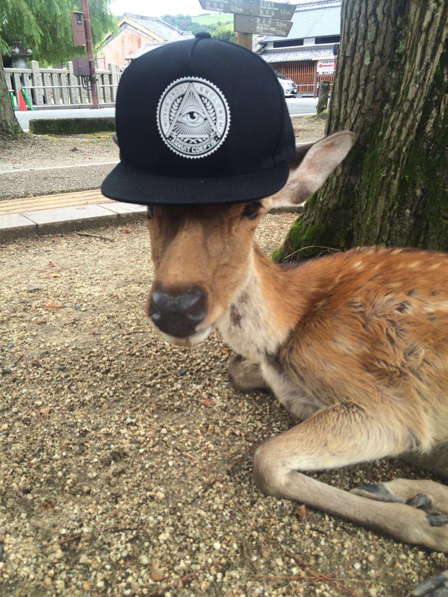 在奈良的景区地界,遇见鹿,真不是什么稀奇事。也许在你不经意间,就突然发现身边的草地、道路上站着、卧着几只鹿。他们都是被放养的,就好像这座小城市的居民们一样,长久生活在这里。来奈良之前,有朋友叮嘱我要小心鹿的攻击;也看到不少攻略中写,鹿会翻包包、抢仙贝。而这些都不假,也都被我们遇上了!为了避免小鹿抢食,我们每次都拿出一片or半片鹿仙贝来喂他们,其余都用袋子包好,放在包里。但有一次忘了拉拉链,竟有一只小鹿迅速将袋子叼了出来!如不是我眼疾手快抢了回来,整包仙贝都要被他们瓜分了。&#x0A