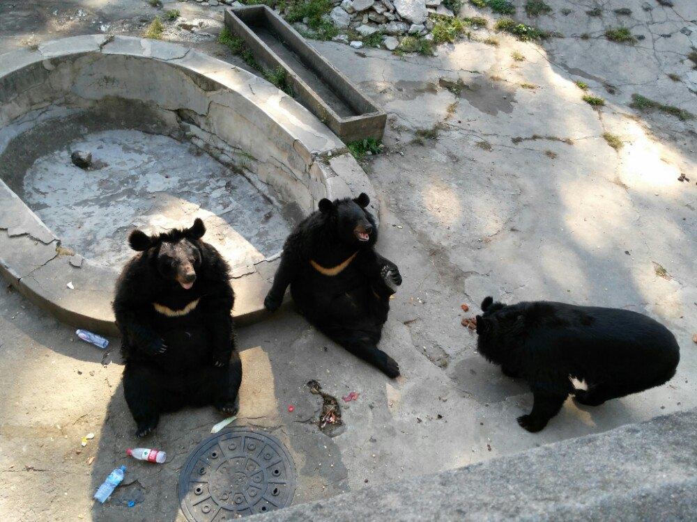 【携程攻略】辽宁锦江山公园景点,有山有塔有动物,小