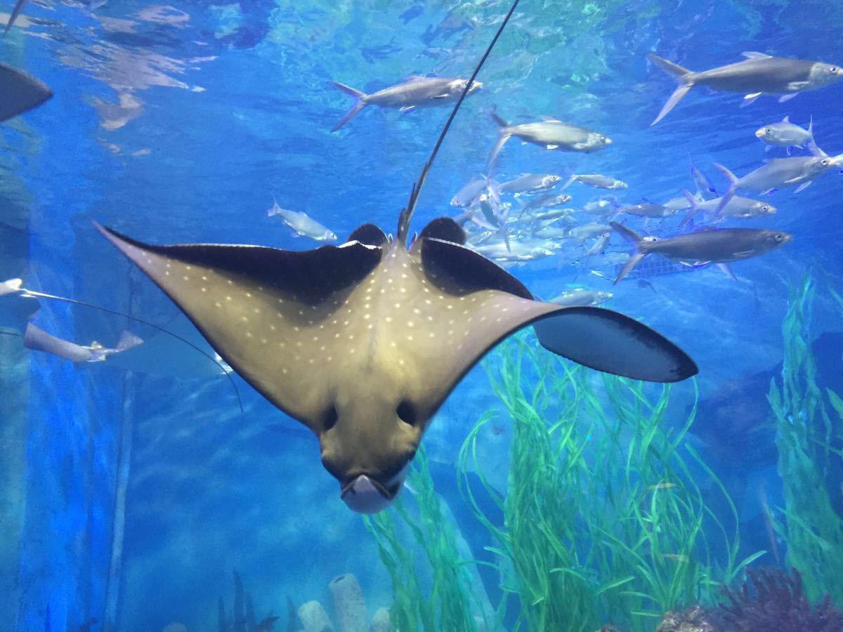 青岛哪个海底世界好玩 山东青岛海底世界 青岛海底世界官网