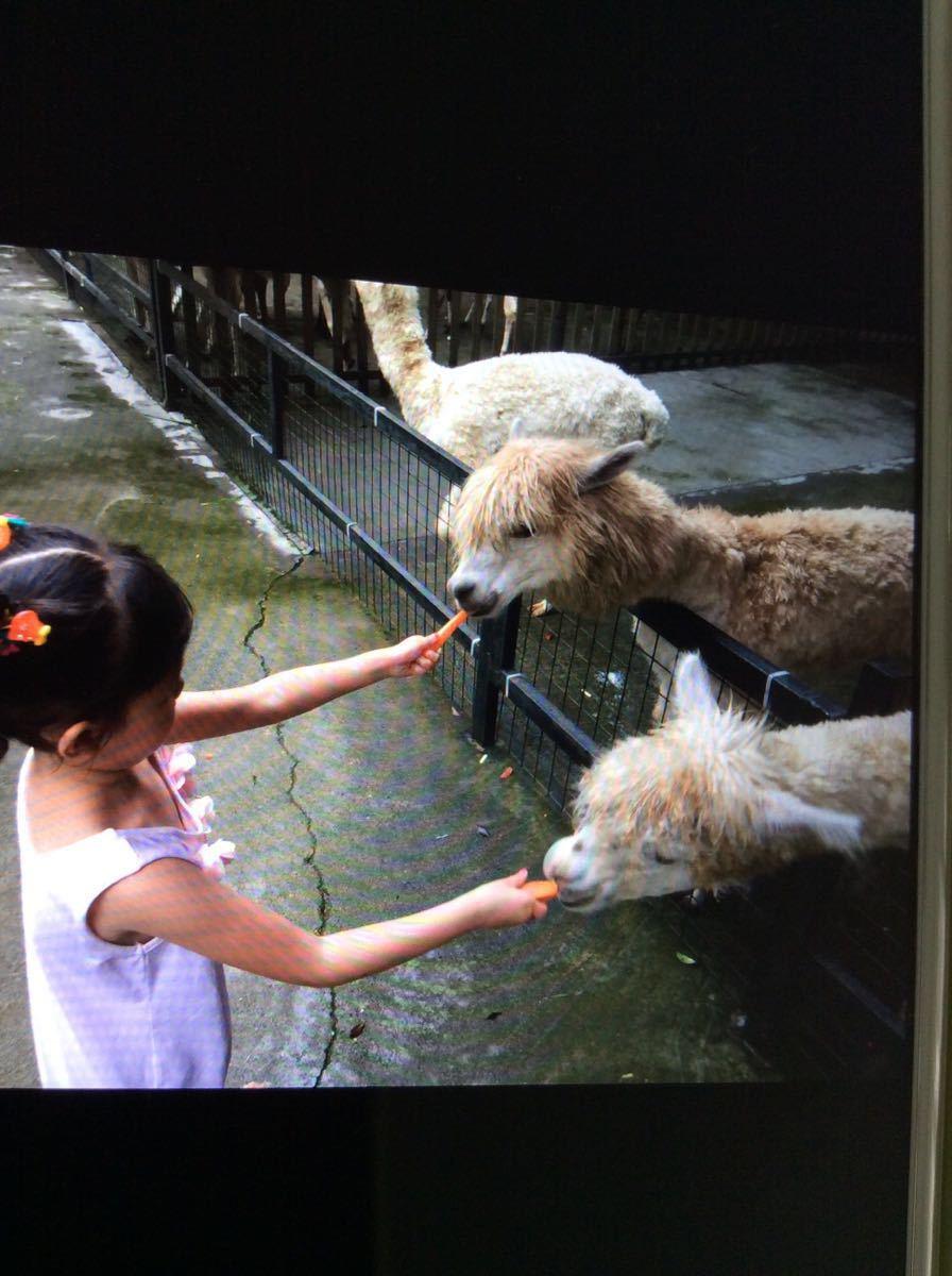 【携程攻略】广东深圳野生动物园适合家庭亲子旅游吗