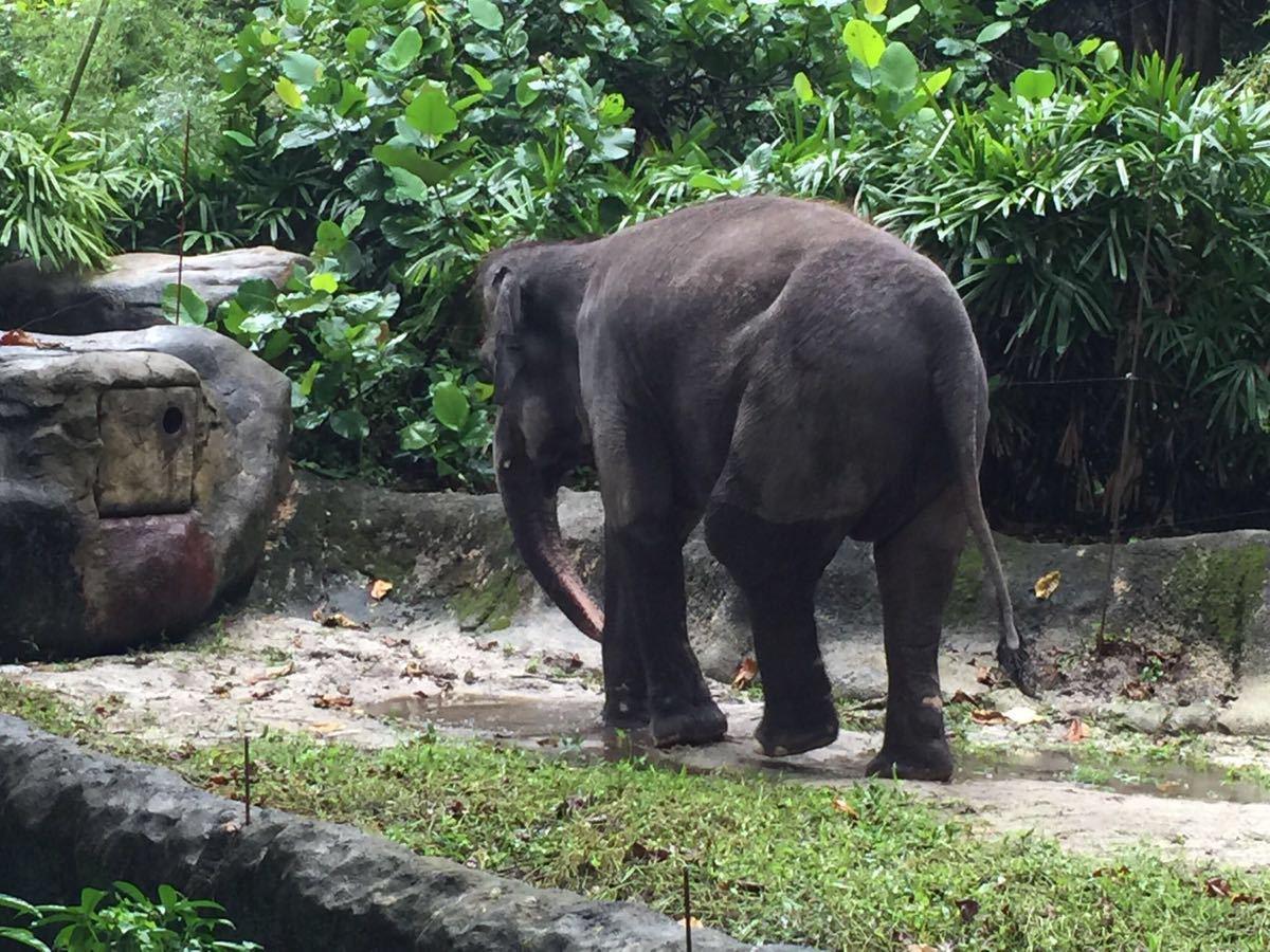 新加坡动物园真的不大,但是却容纳了许多新奇古怪的动物,许多都是我们平时都没见过的。而且这里半开放的环境让人和动物和谐相处,处处都有爱护大自然的宣传。几乎全天每个时段都有表演看,所以趣味性还是有的。小朋友还可以在水上乐园疯狂一下,一天时间都不够用啊!