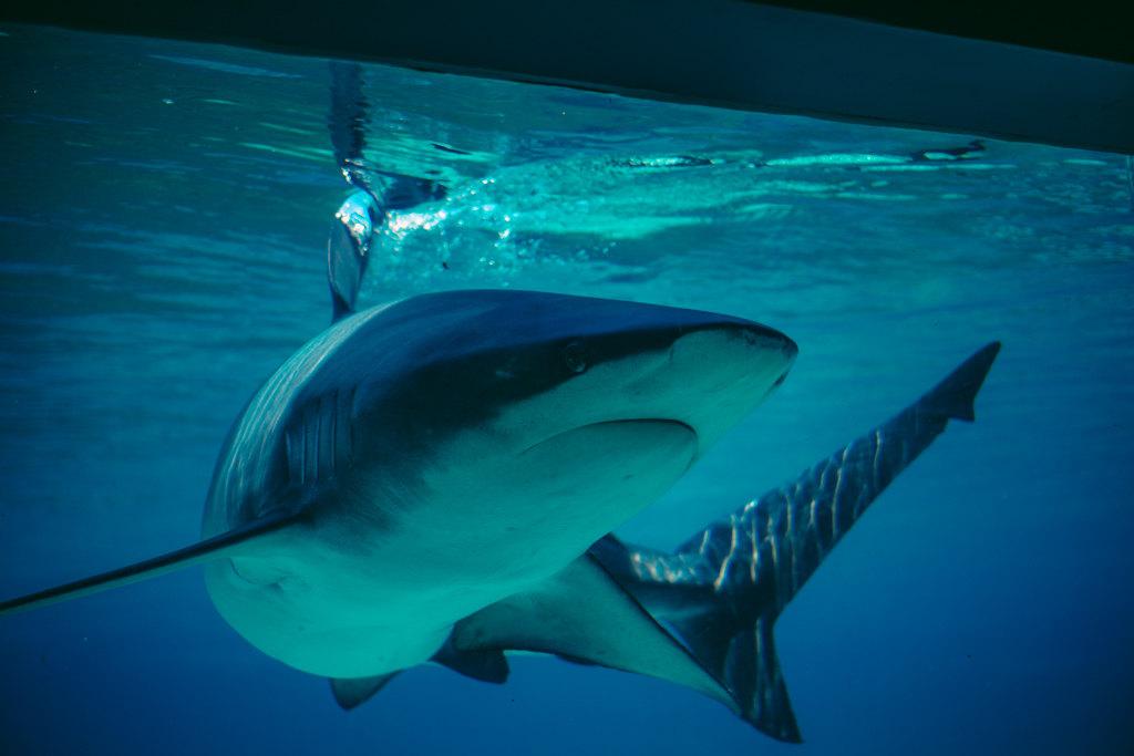 壁纸 动物 海底 海底世界 海洋馆 水族馆 鱼 鱼类 1024_683