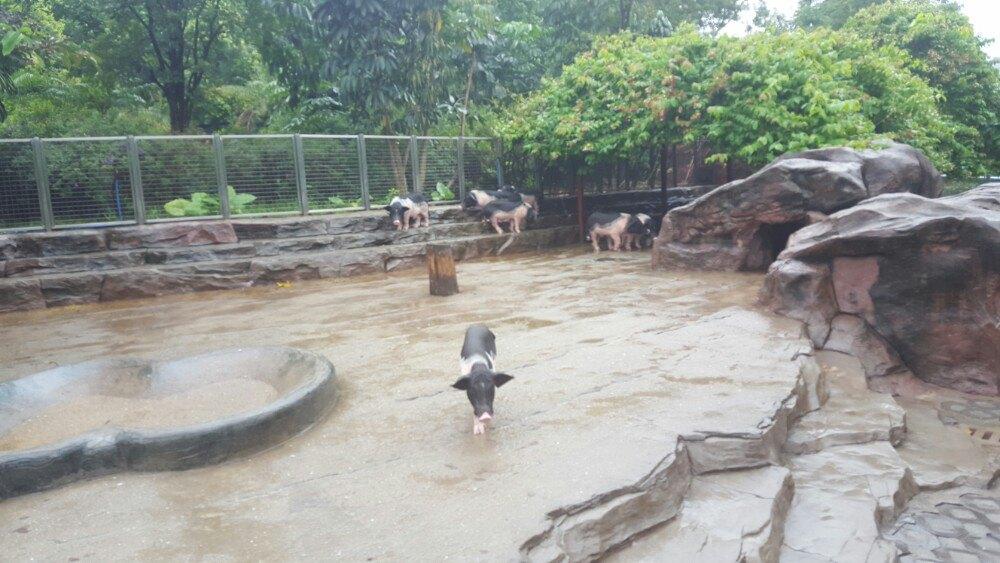 【携程攻略】广东广州广州动物园好玩吗