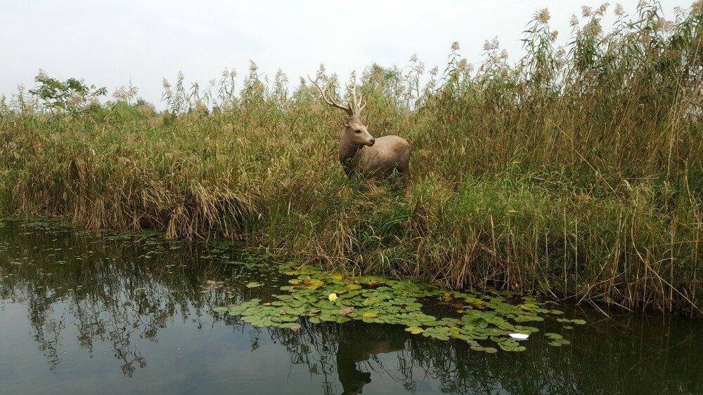 【携程攻略】江苏溱湖国家湿地公园景点
