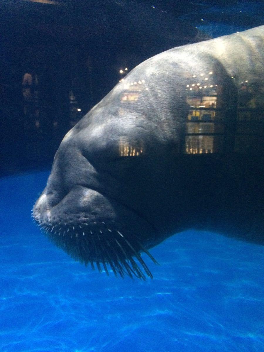 【携程攻略】天津天津海昌极地海洋公园景点,动物很多