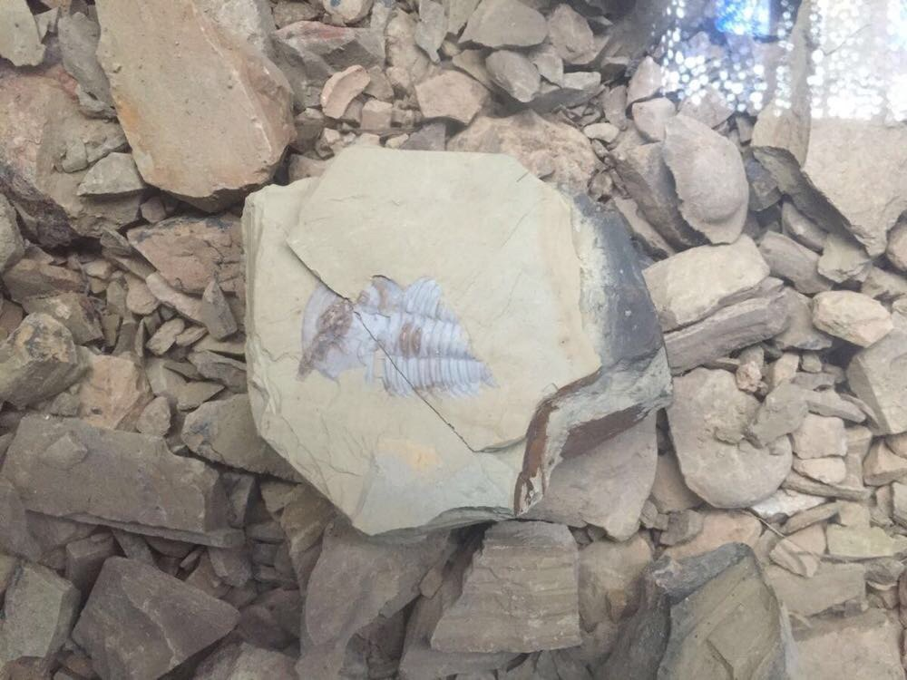 澄江动物化石