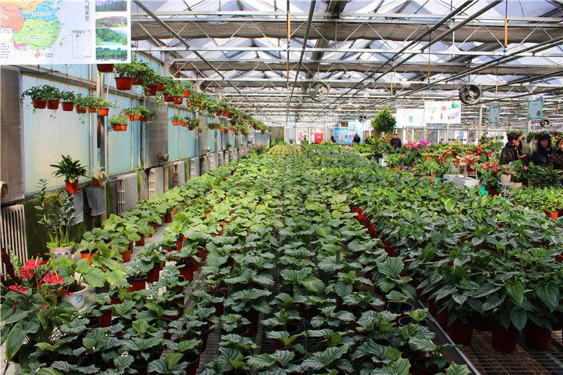 北国的冬日,冰天雪地,万物凋零,鲜花早已不见了踪影。不过现代科技的发展,还是使冬日赏花成为可能,这就是大棚里的花卉了。大棚,原是蔬菜生产的专用设备,随着生产的发展大棚的应用越加广泛。当前大棚已用于盆花及切花栽培。大棚花卉,就是将许多不同种类的花卉汇集到大棚的一种种植技术。大棚里的花种类繁多,让人在冬季也能欣赏到美丽的鲜花。