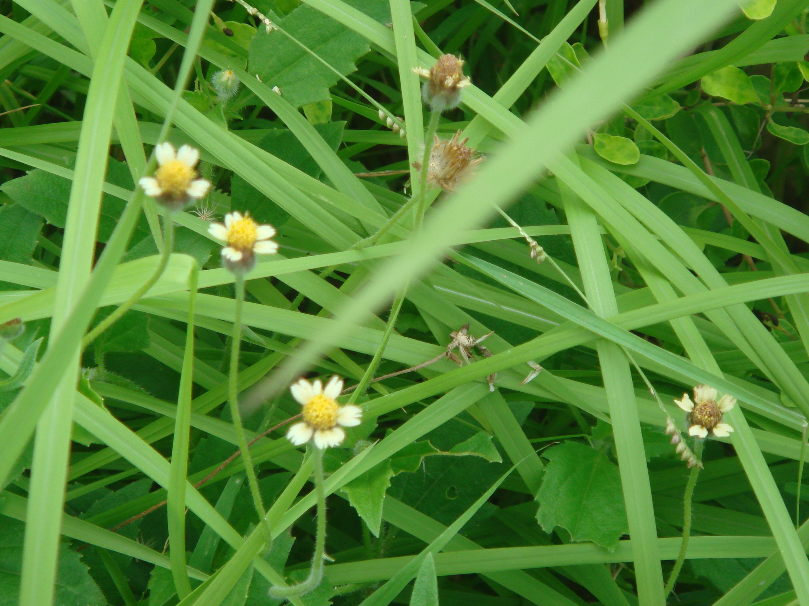 除了各种植物之外,居然里面也有一些小动物,比较神奇.