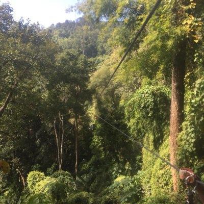 tarzan adventure丛林飞跃图片